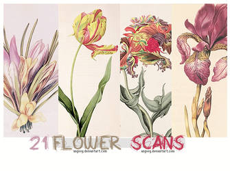 21 Flower scans by ANGOOY