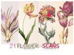 21 Flower scans