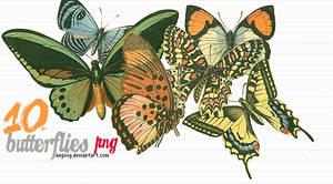 10 butterflies png