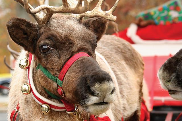 reindeer games keep me - photo #8