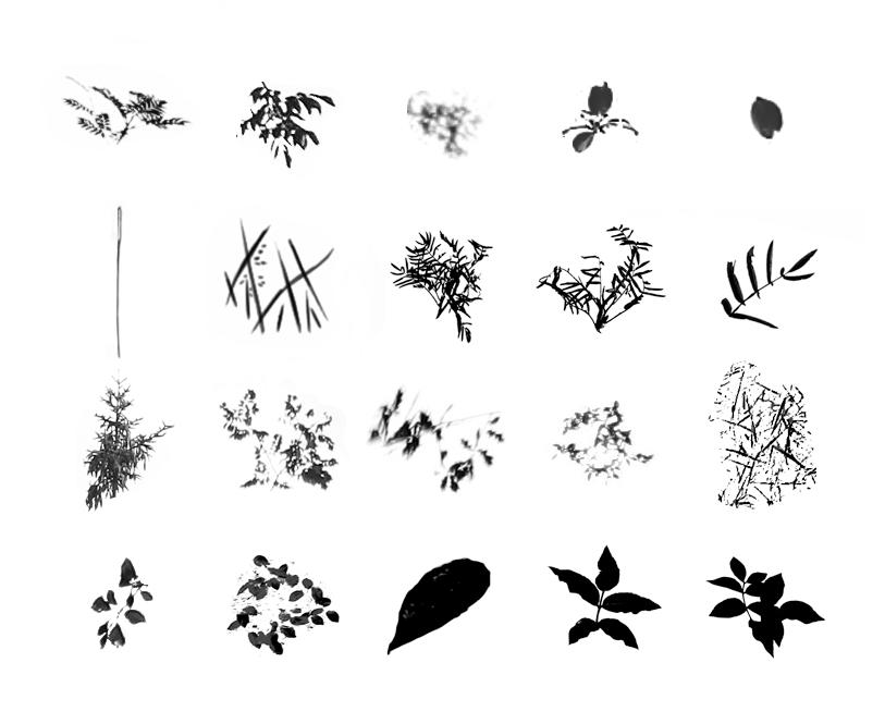 Foliage Brush Set - images by dierat