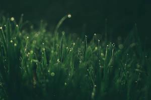 SpringGrass by 1darkstar1