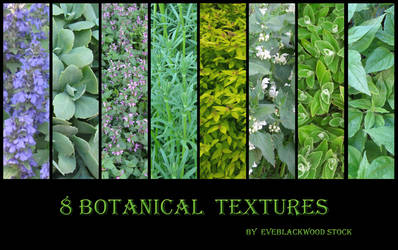 plant texture 2 by EveBlackwoodStock