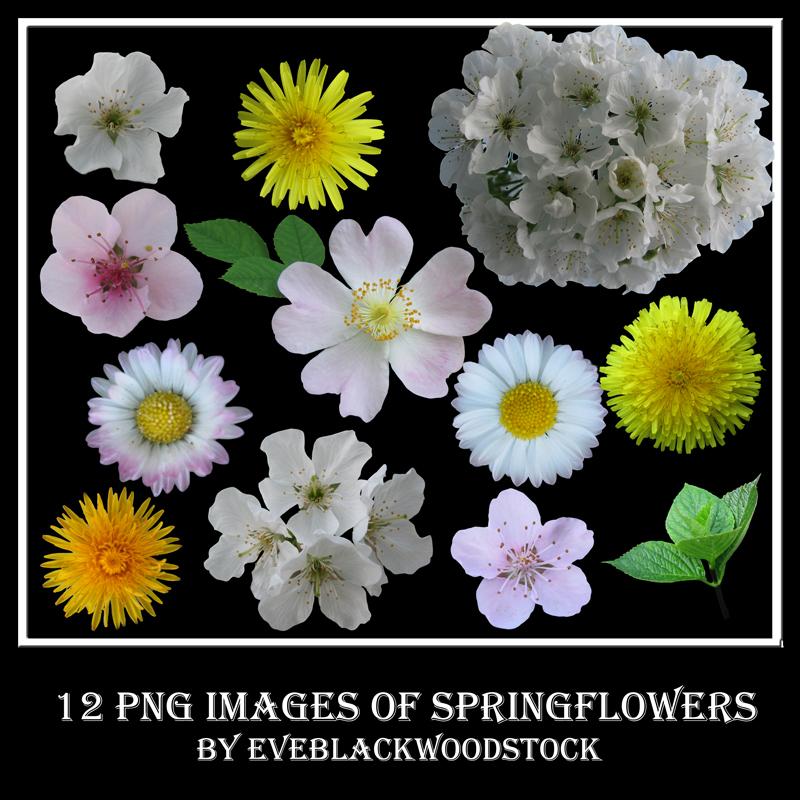 spring flowers stock pack by EveBlackwoodStock