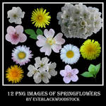 spring flowers stock pack
