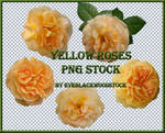 yellow roses PNG stock pack