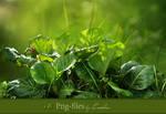 Plant - psd-files