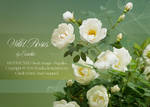 WildRoses - png-files