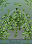 Vines - png-files