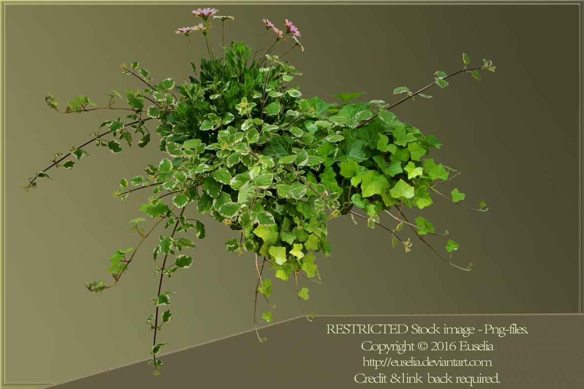 Vines and flowers - png-stock img