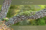 Tree trunk2 - png-stock