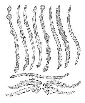 Ultimate_evil_tentacle_brushes