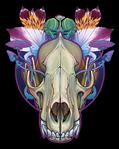 Wolf Skull by uialwen