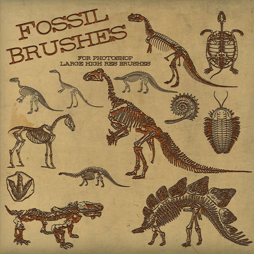 PS Brushes: Dinosaur Fossil by HGGraphicDesigns