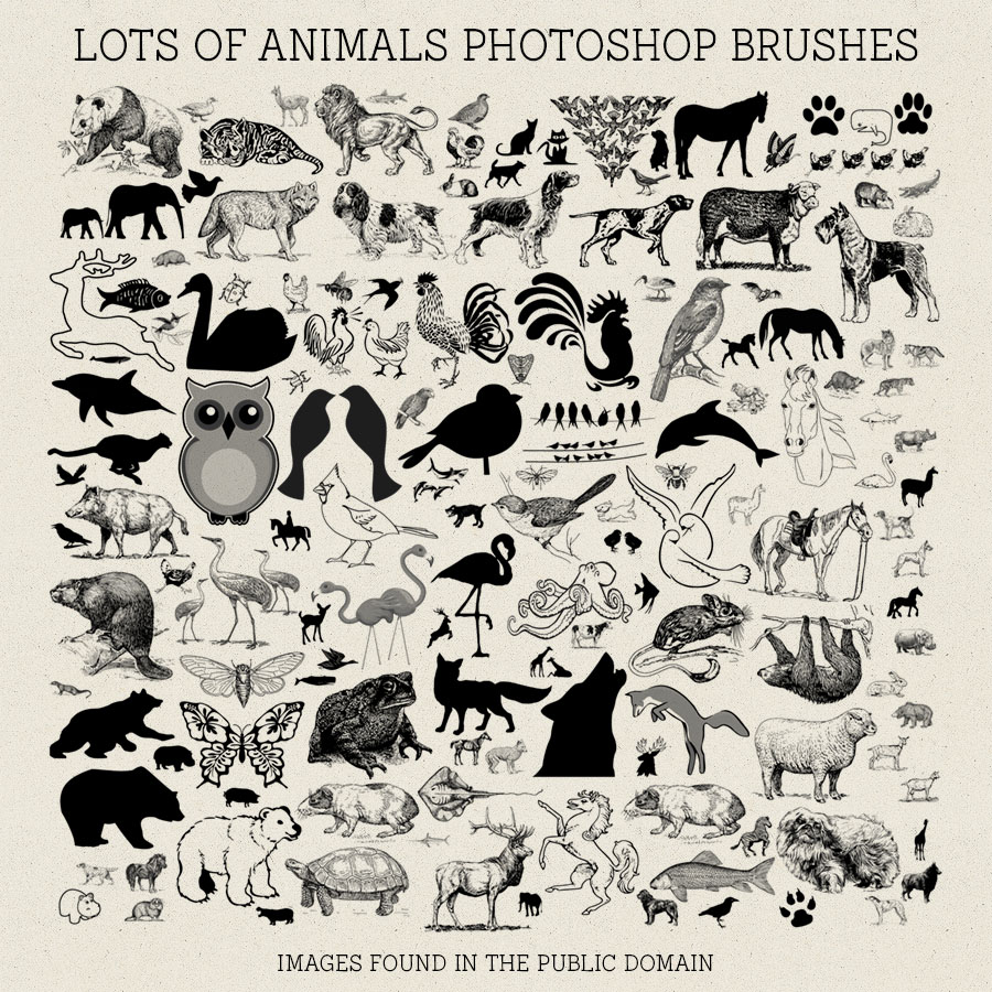 PS Brushes: Lots Of Animals by HGGraphicDesigns