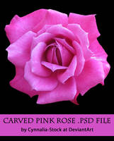 Pink Carved Rose by Cynnalia-Stock