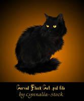 Black Cat by Cynnalia-Stock