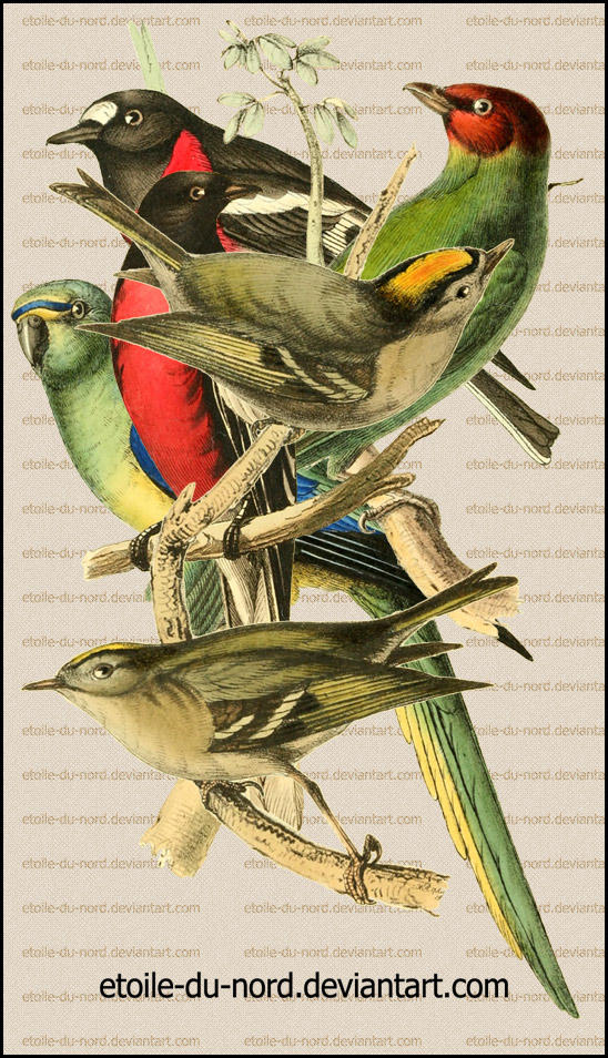 birds by Etoile-du-nord