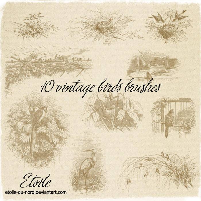 10 vintage birds brushes by Etoile-du-nord
