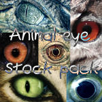 Animal eyes stock pack by ftourini
