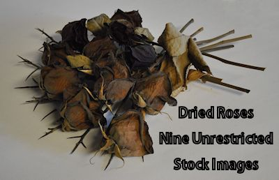 Dried Roses by FollowinTheBlackBird