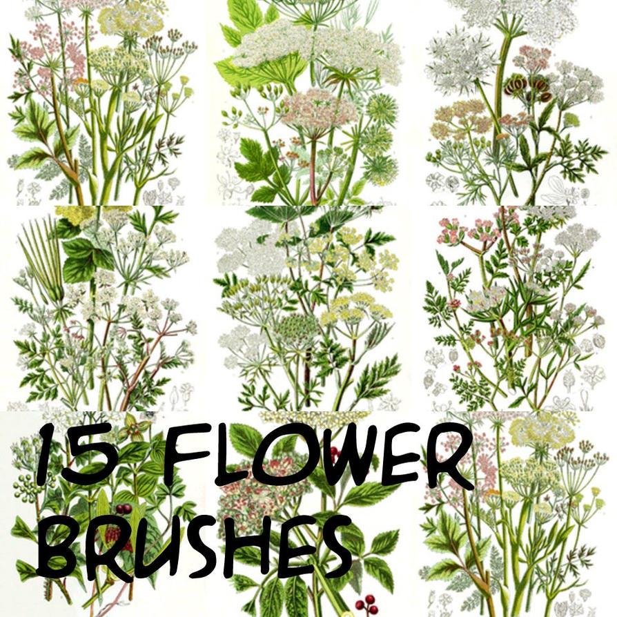 photoshop flower brushes by freedom16