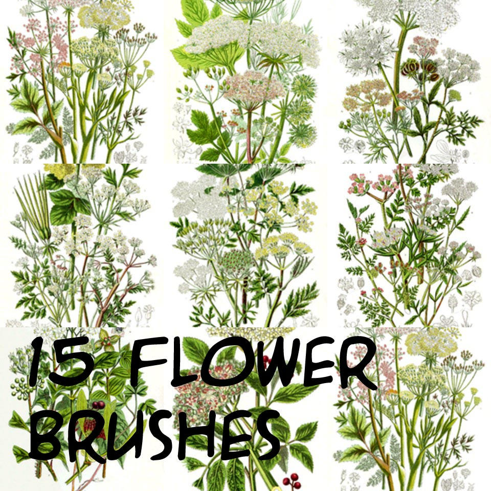 photoshop flower brushes by freedom16