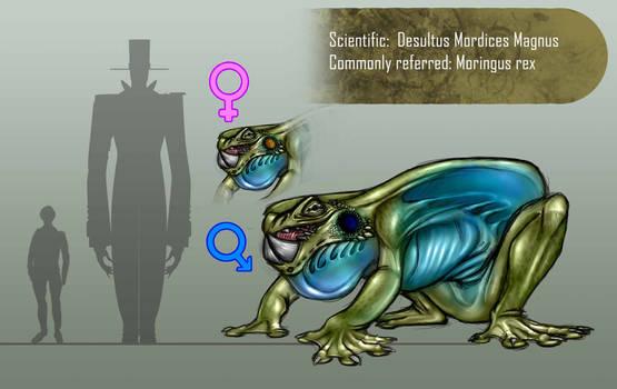 Moringus-rex