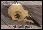 Bird Skull pack