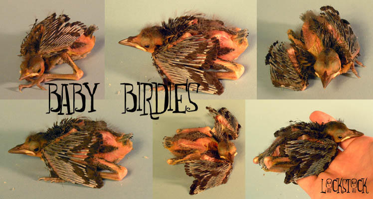 Baby Birds by lockstock