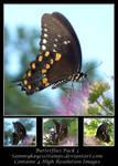 Butterflies Pack 3
