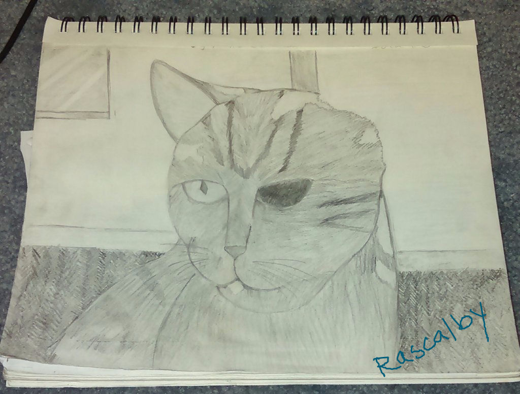 The Ugly Cat That I Drew In Art Class By Rascalby On Deviantart