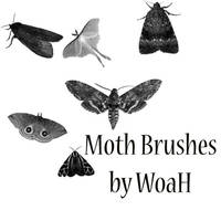 Moth Brushes by WingsOfAHero
