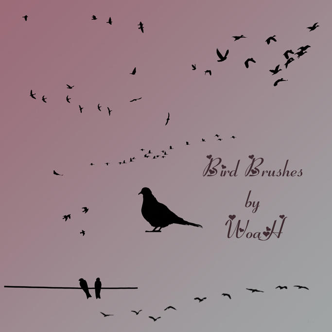 Bird Brushes by WingsOfAHero