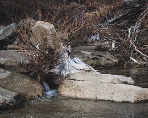 Rock Stump