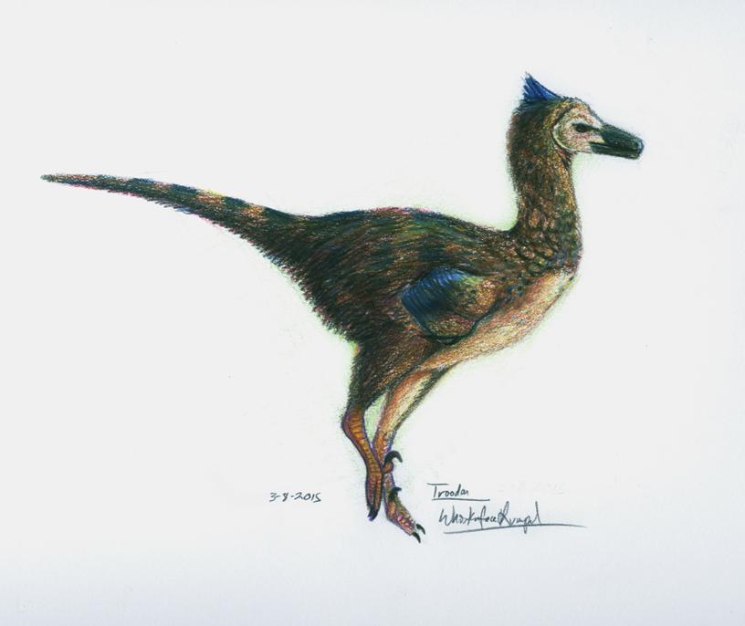 Male Troodon