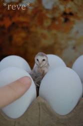 Miniature Barn Owl * Handmade Owl Sculpture * by ReveMiniatures