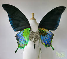 Pipevine Butterfly Wings Commission, Back