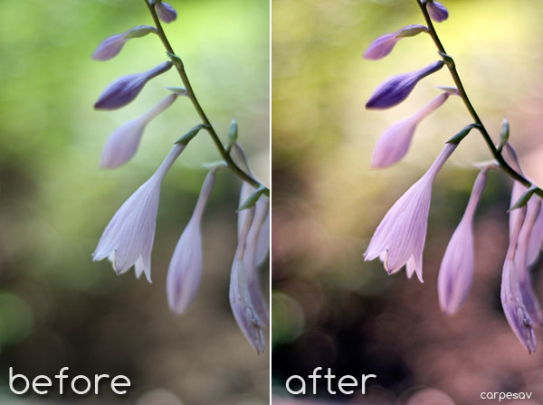 Spring Fever-Photoshop Action