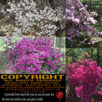 Flower Bushes