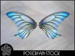 La Butterfly Wings 002
