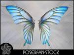 La Butterfly Wings 003