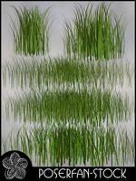 Grass 003 by poserfan-stock