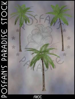 Palms 001