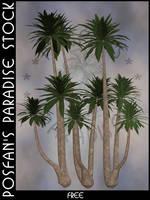 Palms 002 by poserfan-stock