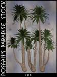 Palms 002