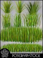 Grass 002 by poserfan-stock