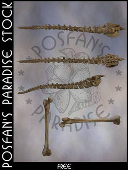 Bone Spines + Bones