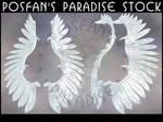 PC 020 - Winter Ice Wings by poserfan-stock