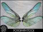La Dragonfly Wings 001
